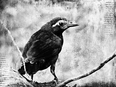 Young Grackle Art Print by Cassie Peters