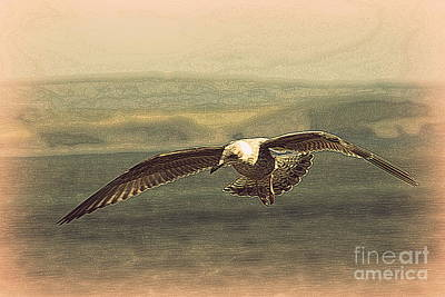 Young Gull Print by Linsey Williams