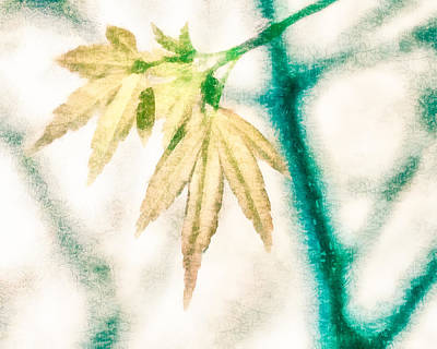 Trees Digital Art - Young Maple Leaves by Priya Ghose