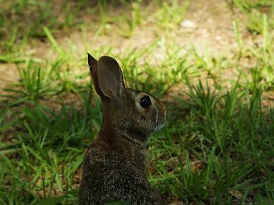 - Young Rabbit by Billy  Griffis Jr