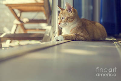 Photograph - Young Red Cat In Sunshine by Patricia Hofmeester