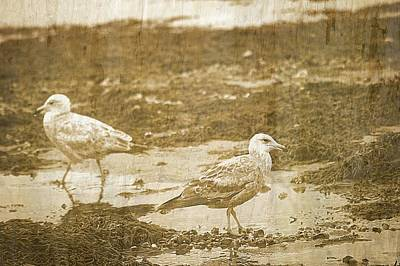Young Seagulls On Harwich Cape Cod Beach Art Print by Suzanne Powers