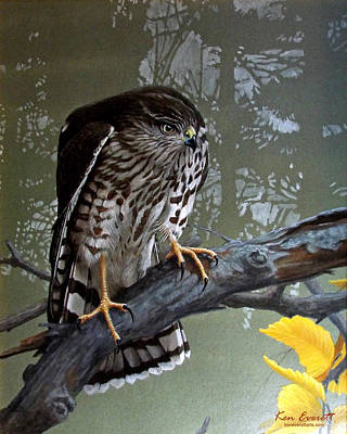 Hawk Painting - Young Sharpie by Ken Everett