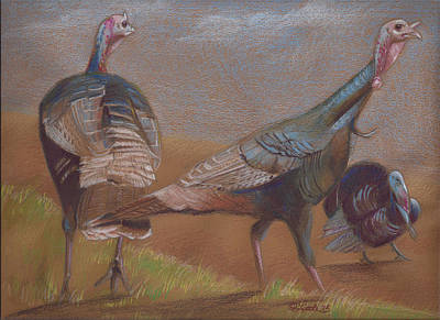 Turkey Mixed Media - Young Toms by Pam Little