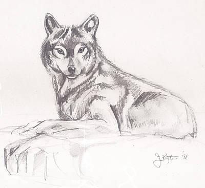 Drawing - Young Wolf by John Keaton