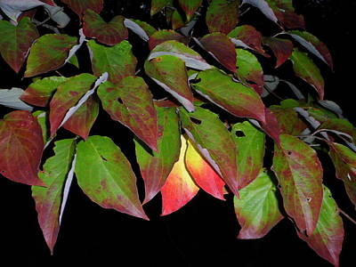 Photograph - Your Colors Are Showing by Lew Davis