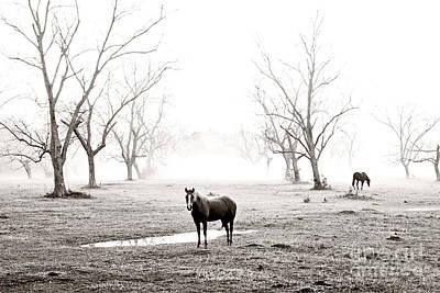 Pellegrin Photograph - Your Morning Joe by Scott Pellegrin