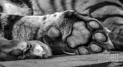 Photograph - Your Tiger Feet by Darren Wilkes