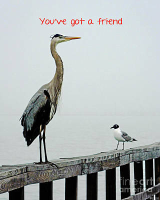 Photograph - Youve Got A Friend by Lizi Beard-Ward