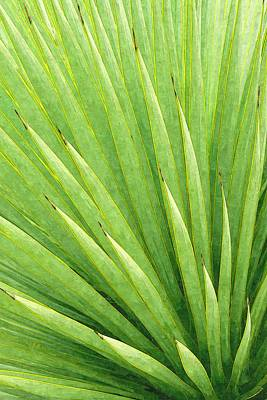 Photograph - Yucca Abstract by Ram Vasudev