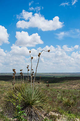 Photograph - Yucca And Clouds by Nathan Hillis