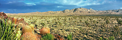 National Preserves Photograph - Yucca And Joshua Trees In A Desert by Panoramic Images