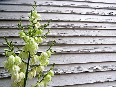 Photograph - Yucca And Peeling Paint  by Nancy Patterson