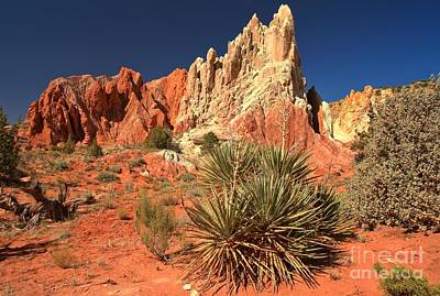Photograph - Yucca Badlands And Colors by Adam Jewell