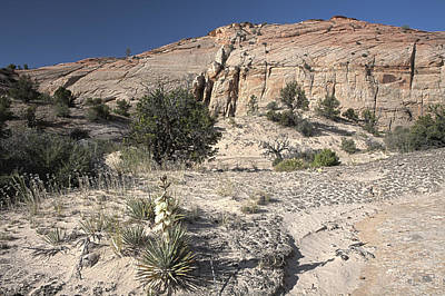Photograph - Yucca Blooming In Escalante by Gregory Scott