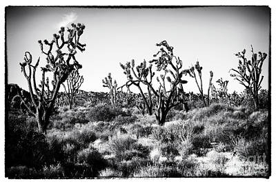 Photograph - Yucca Brevifolia by John Rizzuto