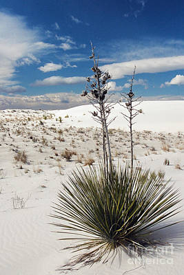Photograph - Yucca Dunes by Frank Townsley