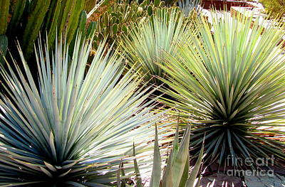 Marilyn Photograph - Yucca Explosion by Marilyn Smith