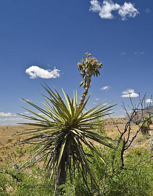 High Park Wildfire Photograph - Yucca Fights Back by Allen Sheffield