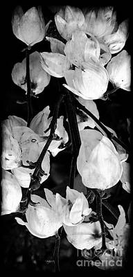 Yucca Flowers Art Print by Kathleen Struckle