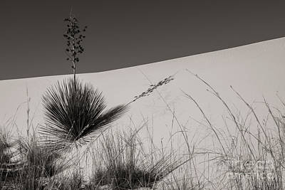 Photograph - Yucca In The Sand I by Sherry Davis