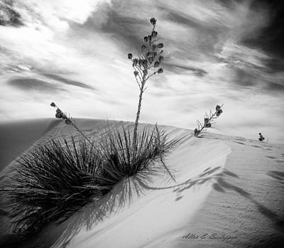 Yucca In White Sand Art Print by Allen Biedrzycki