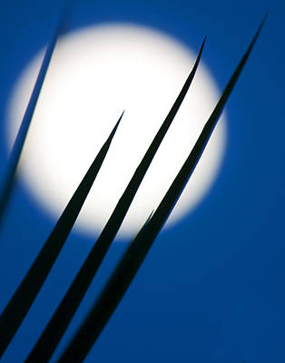 Art Print featuring the photograph Yucca Moon by Jim Garrison