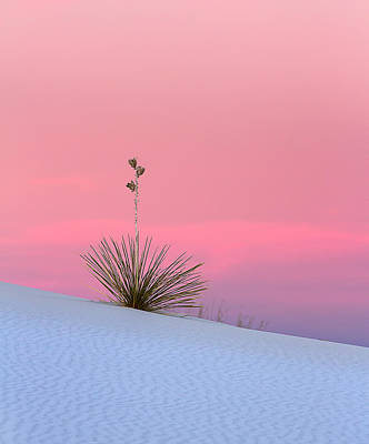 Yucca On Pink And White Art Print by Kristal Kraft