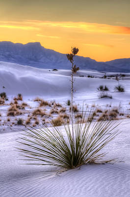 Art Print featuring the photograph Yucca On White Sand by Kristal Kraft