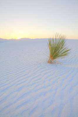 Art Print featuring the photograph Yucca Plant At White Sands by Alan Vance Ley