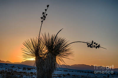 White Sands Photograph - Yucca Sunset by Tod and Cynthia Grubbs