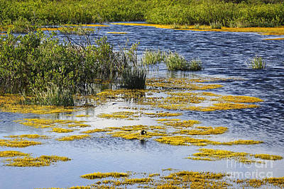 Photograph - Yukon Wetland by Charline Xia