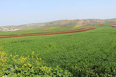 Photograph - Zababdeh Field by Munir Alawi