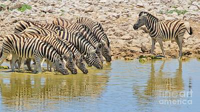 Photograph - Zebra - Water Is Life by Hermanus A Alberts