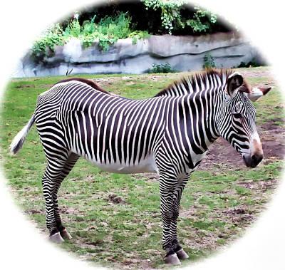 Art Print featuring the photograph Zebra 1 by Dawn Eshelman