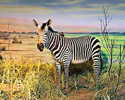 Photograph - Zebra 1 by Walter Herrit