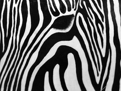 Zebra 13 Art Print by Jane Biven