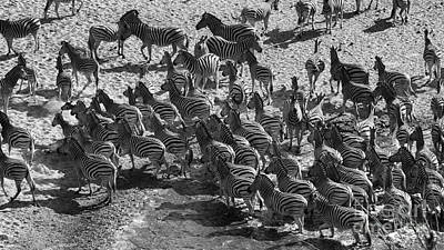 Photograph - Zebra 2 by Mareko Marciniak