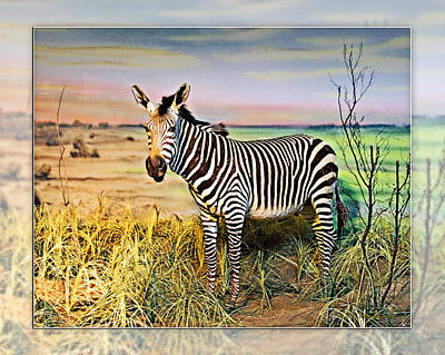Photograph - Zebra 2 by Walter Herrit