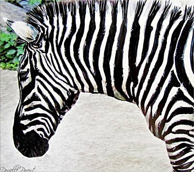 Photograph - Zebra Alcohol Inks  by Danielle  Parent