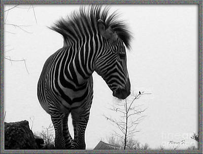 Photograph - Zebra And Bird by Nina Silver