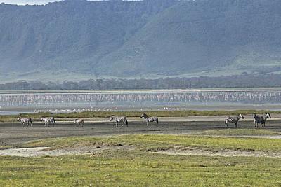 Photograph - Zebra At Ngorongoro by Tony Murtagh