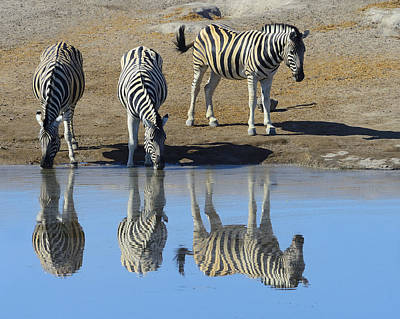 Photograph - Zebra At The Watering Hole by Tony Beck