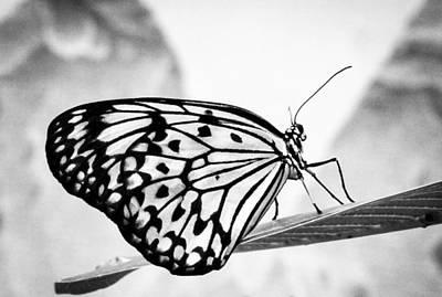 Zebra Butterfly Art Print by Cathy Donohoue