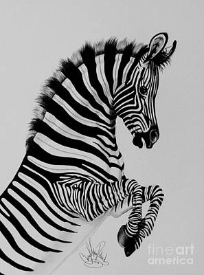 Drawing - Zebra Colt Playing by Cheryl Poland