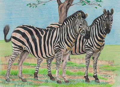 Drawing - Zebra Companions by Audrey Van Tassell