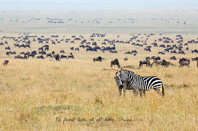 Photograph - Zebra Couple by June Jacobsen
