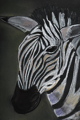 Painting - Zebra by Dorothy Riley