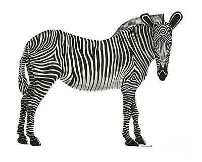 Drawing - Zebra by E B Schmidt