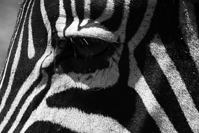 Zebra Eye Art Print by Aidan Moran